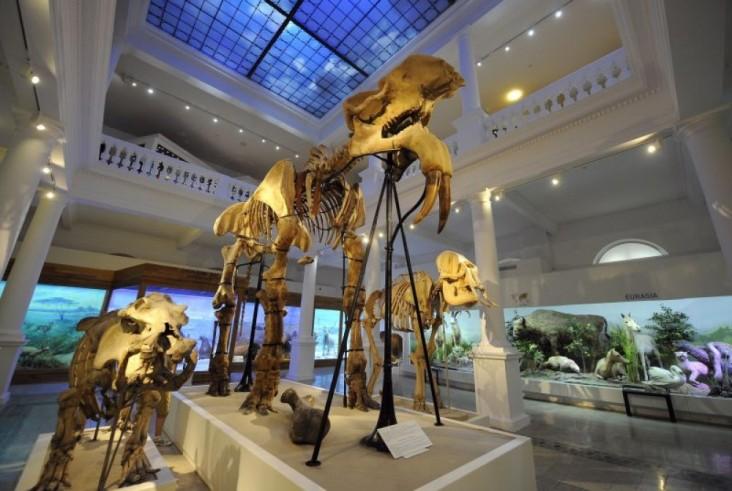 Antipa Museum of Natural History